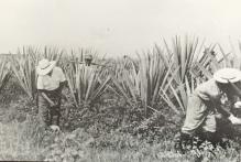 멕시코 초기이민자들1