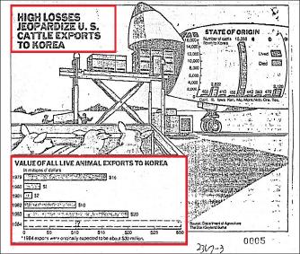 ▲ 1984년 5월 13일자 '캔사스시티스타' 의 한국소 검역부정 특집기사의 일부