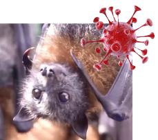 ▲  신종 바이러스가 박쥐에서 생겨났다고 알려졌다.